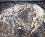 Decomposed body at the late stage