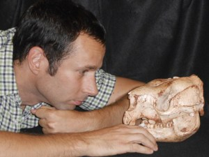 Dr Bastien Llamas with a skull of an extinct short-faced kangaroo (Simosthenurus occidentalis). Image credit: University of Adelaide