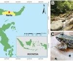 Collection locality, habitat and live Limnonectes larvaepartus.