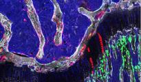 ocr-cells