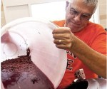 OSU's Neil Shay studies metabolic effects of grape chemicals. Here he pours grape juice into a wine vat. Photo by Lynn Ketchum