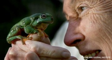 World Frog Day: A Story About Saving One of the World's Rarest