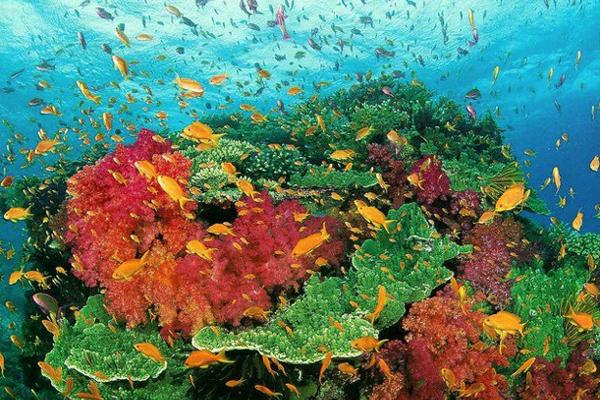 شعاب مرجانية رائعة في أعماق الحاجز المرجاني العظيم