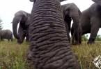 الفيل كاميرا GoPro