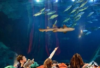 نفق القرش فى مارين أكريوم الوطنى