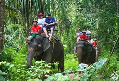 الأفيال في كوه ساموي