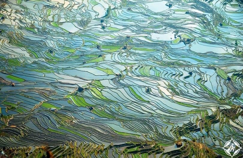 مصاطب الأرز في يوانيانغ