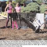 FKWRC Releases Rehabilitated Pelicans