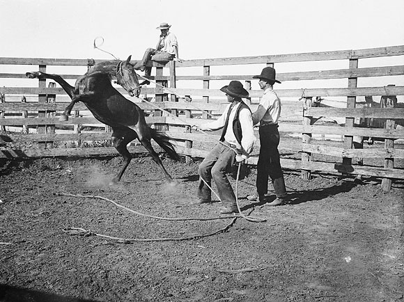 Early 1900's cowboys busts a bronco.