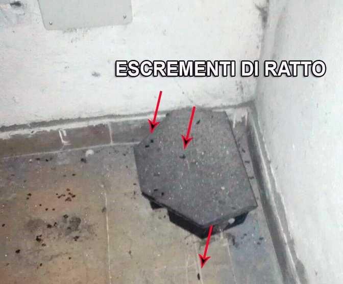 Topi e sporcizia in cucina a Trastevere, sigilli dei vigili