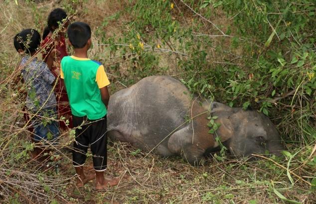 Four baby elephants killed by speeding train in Sri Lanka