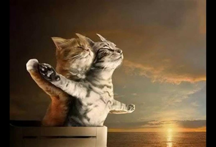 image-of-titanic-cats