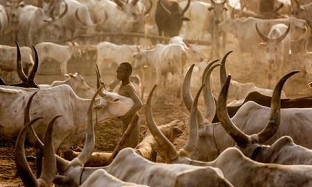 face2faceafrica.com