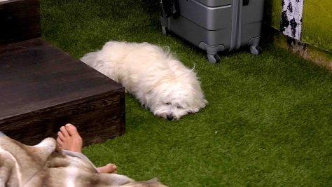 Tag1_Hund schlaeft