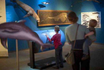 """Zahlreiche Mitmach-Stationen laden Groß und Klein in der Sonderausstellung """"Wale - Riesen der Meere"""" zum Ausprobieren ein. Foto: LWL/Oblonczyk"""