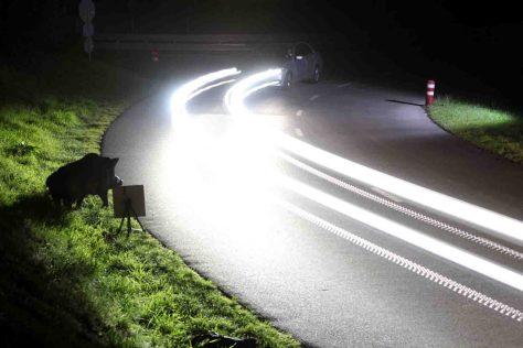 Vorsicht Wild! Bei Sichtkontakt abbremsen und Fernlicht ausschalten. Scheinwerferlicht irritiert die Tiere. © ADAC