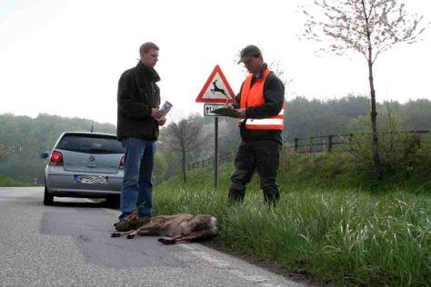 Unfallaufnahme: In der Jagdsaison 2012/2013 ereigneten sich knapp 210 000 Wildunfälle, sieben Prozent mehr als 2011/12. Foto: ADAC