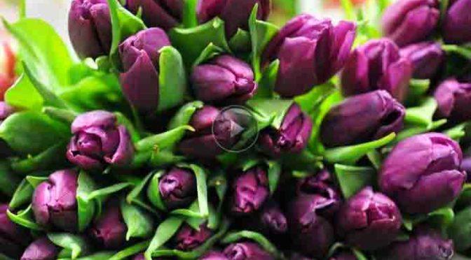 Valentinstag ist Blumentag – Online-Blumenversender im Test