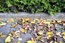 Herbstlaub auf dem Gehweg, Laub, Garten Foto: dpj/newpol.de