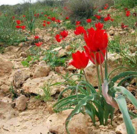 Wüstenpflanzen in Israel. Foto: Katja Tielbörger/Universität Tübingen