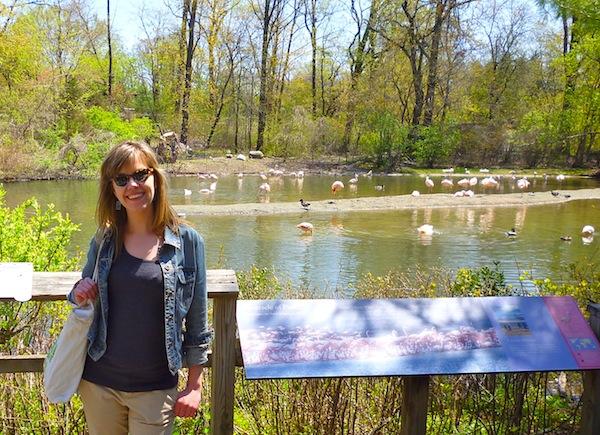 flamingos bronx zoo