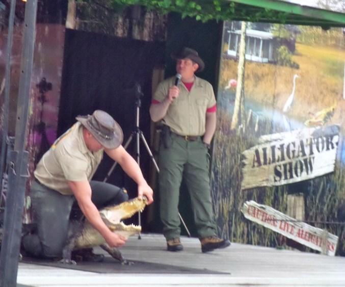 Florida Vacation alligator show