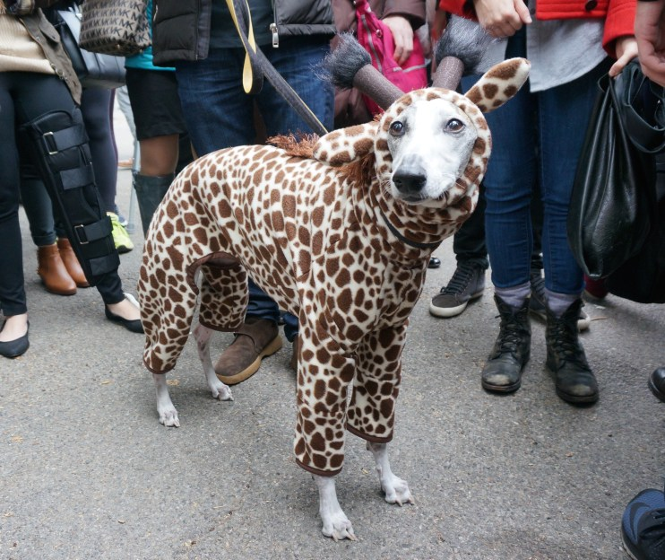 dog_parade_giraffe