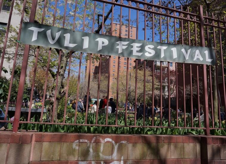 West Side Community Garden Tulip Festival