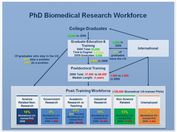 diagram shows the flow of college graduates through graduate and postgraduate training and into the workforce