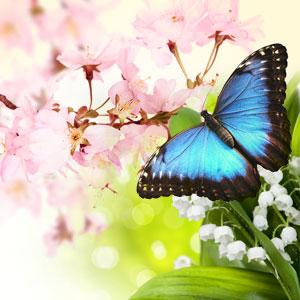 butterfly hugs fragrance oil