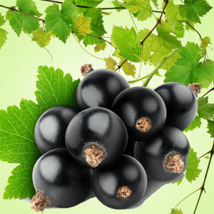 Black Currant Original Fragrance Oil