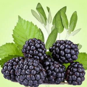 Blackberry Sage Fragrance