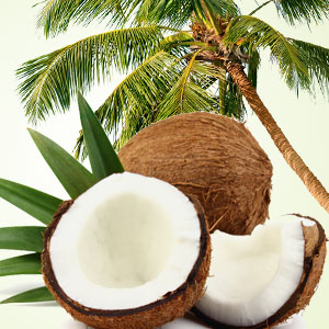 Coconut Craziness Fragrance Oil