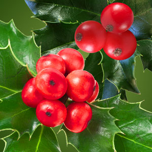 Holly Berry Fragrance Oil