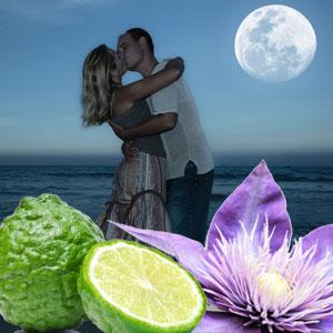 Midnight Romance Fragrance Oil