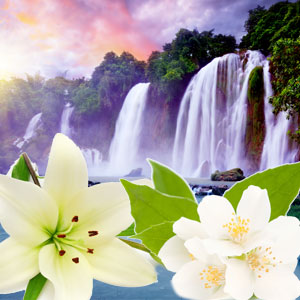 NG Tahitian Waterfall Type Fragrance Oil