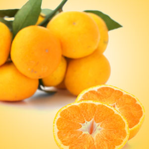 Satsuma Fragrance Oil