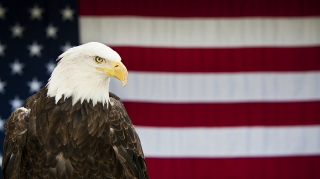 Vì sao đại bàng đầu trắng là loài vật biểu trưng của Mỹ?