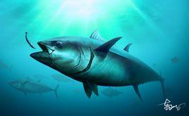 kim thương cá