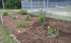 July 10, 2016 NG pollinator garden