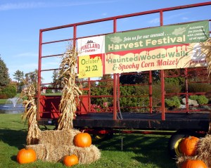 pineland-harvest-festival
