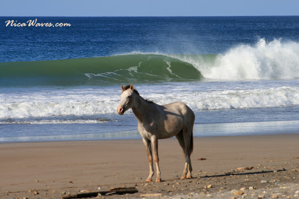 horseback riding nicaragua
