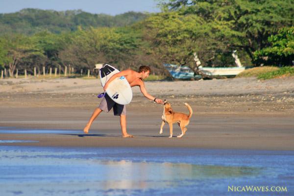 Nicaragua dog