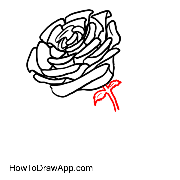 How to draw a rose 08