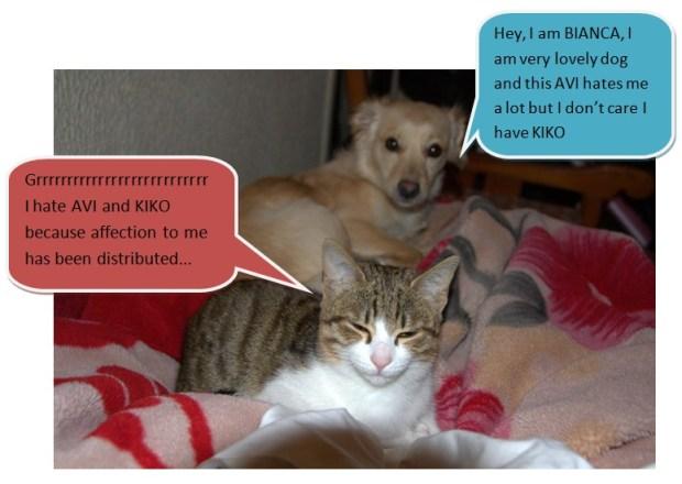 Avi and Bianca (cat and dog)