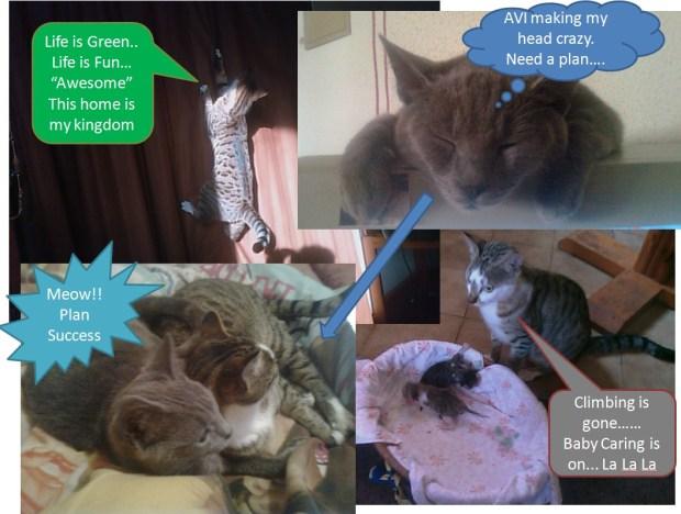 Avi and Kiko (cat family)