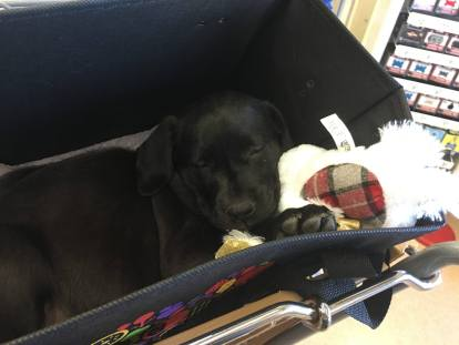 sleeping in the store