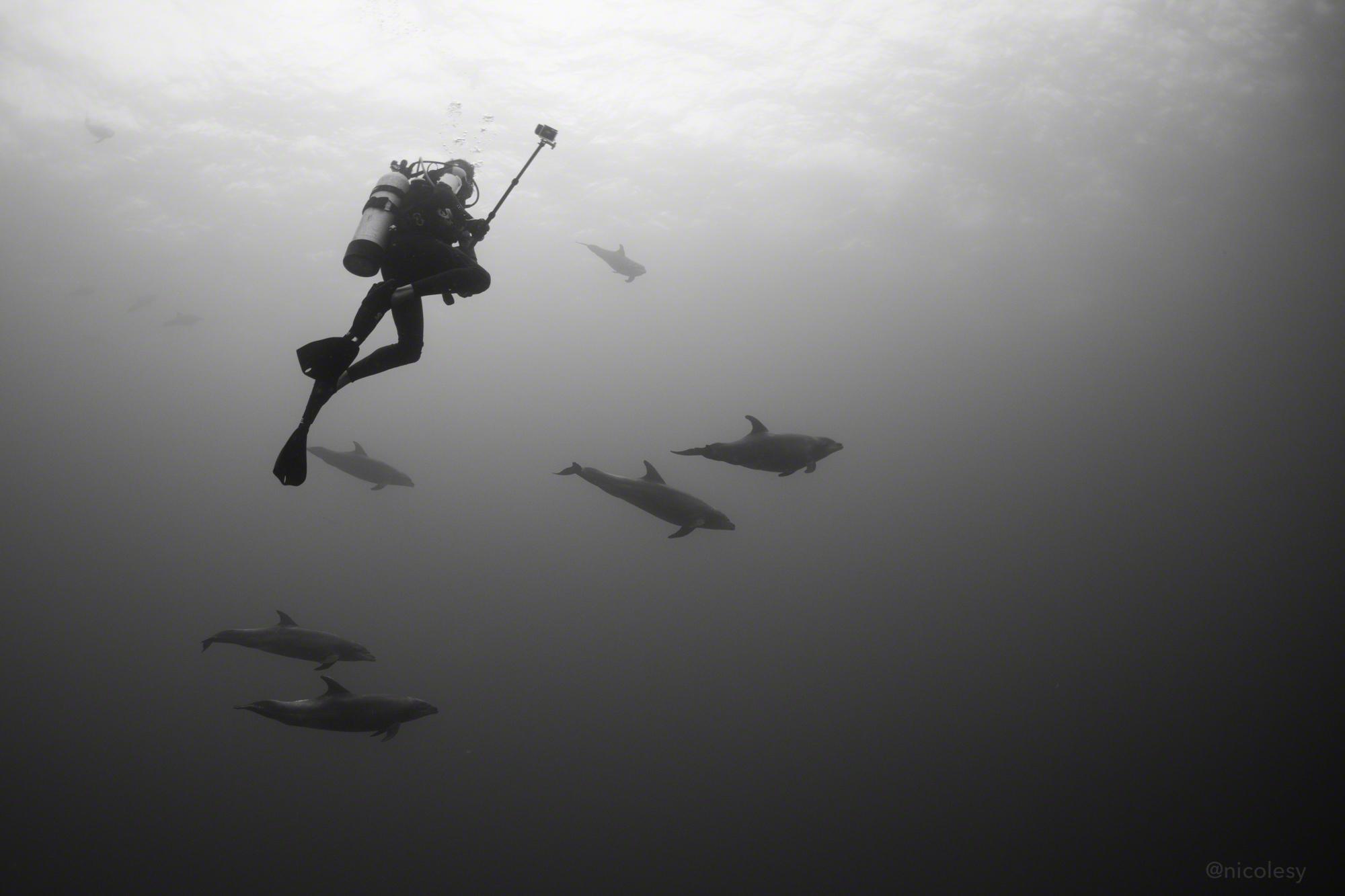 A pod of dolphins and a diver at Roca Partida, Socorro Islands, Mexico