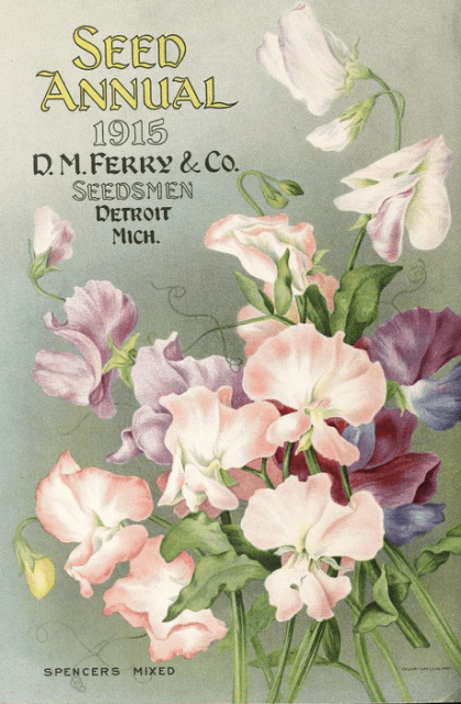 1915-seed-annual-sweet-peas