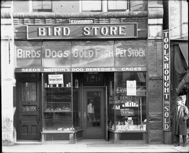 edwards-bird-store